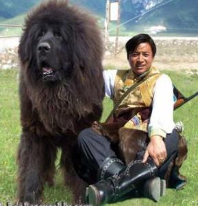 Mongol-ovcharka